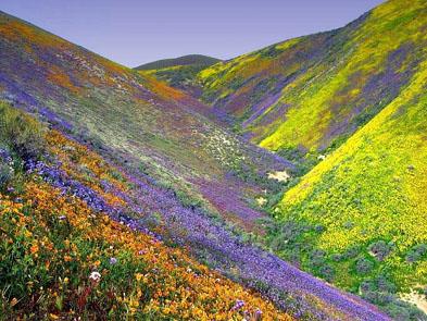SpringWILDFLOWERS-2.jpg